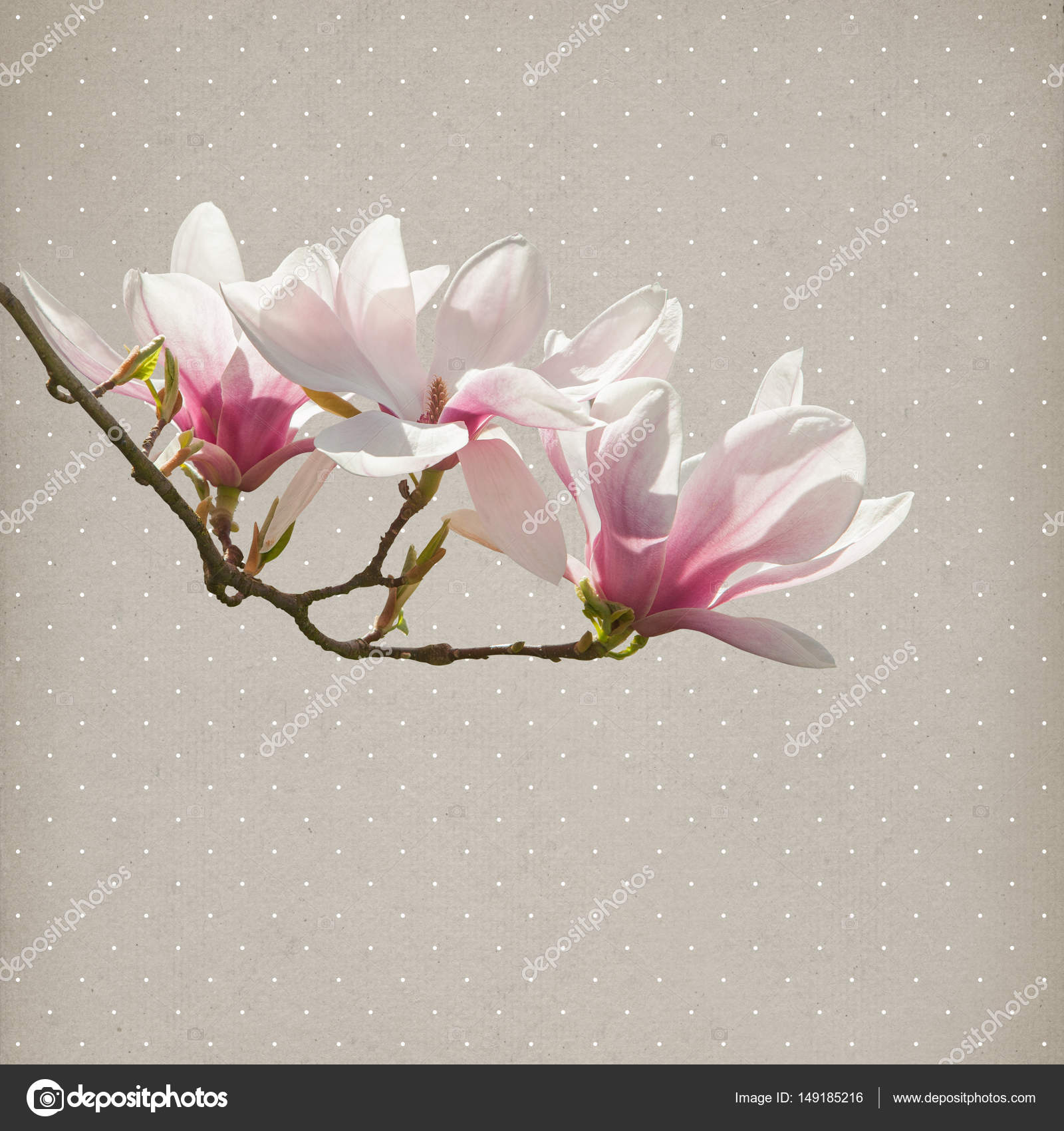 Magnolia Flower Paper Background Stock Photo Piolka 149185216
