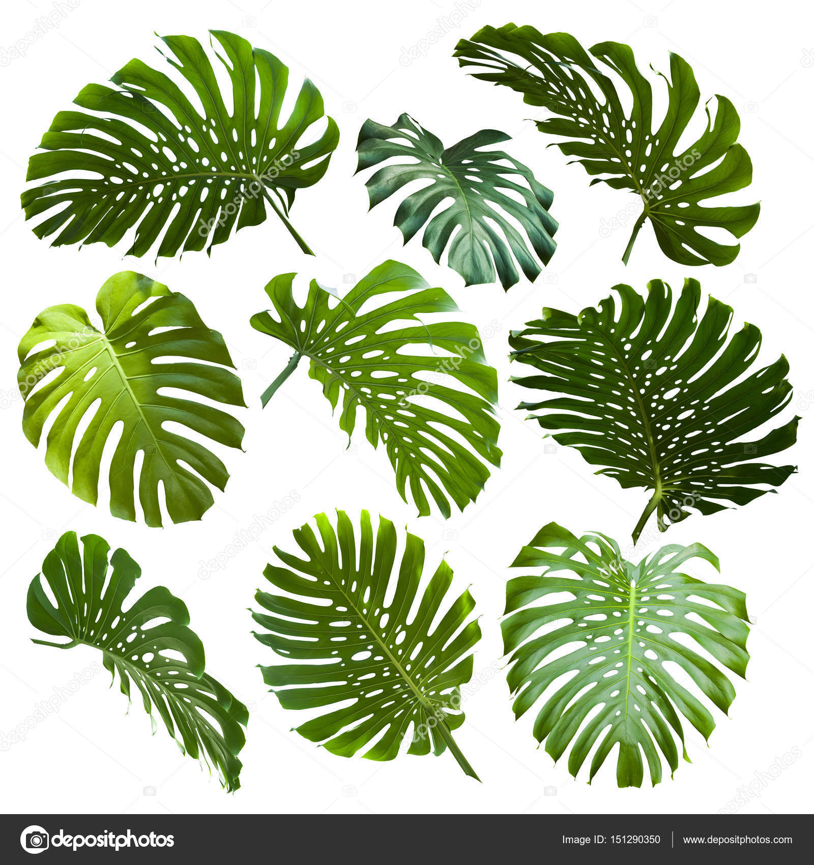Tropical Jungle Leaves Stock Photo C Piolka 151290350 Ideal material for diy, wedding invitations, greeting cards the graphics are a png file, 300 dpi, without background. https depositphotos com 151290350 stock photo tropical jungle leaves html