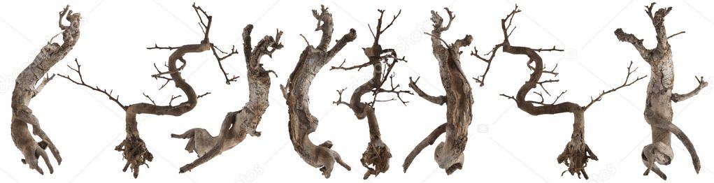 Beyaz Izole Kuru Ahşap Ağaç Gövdesi Stok Foto Piolka 165722296