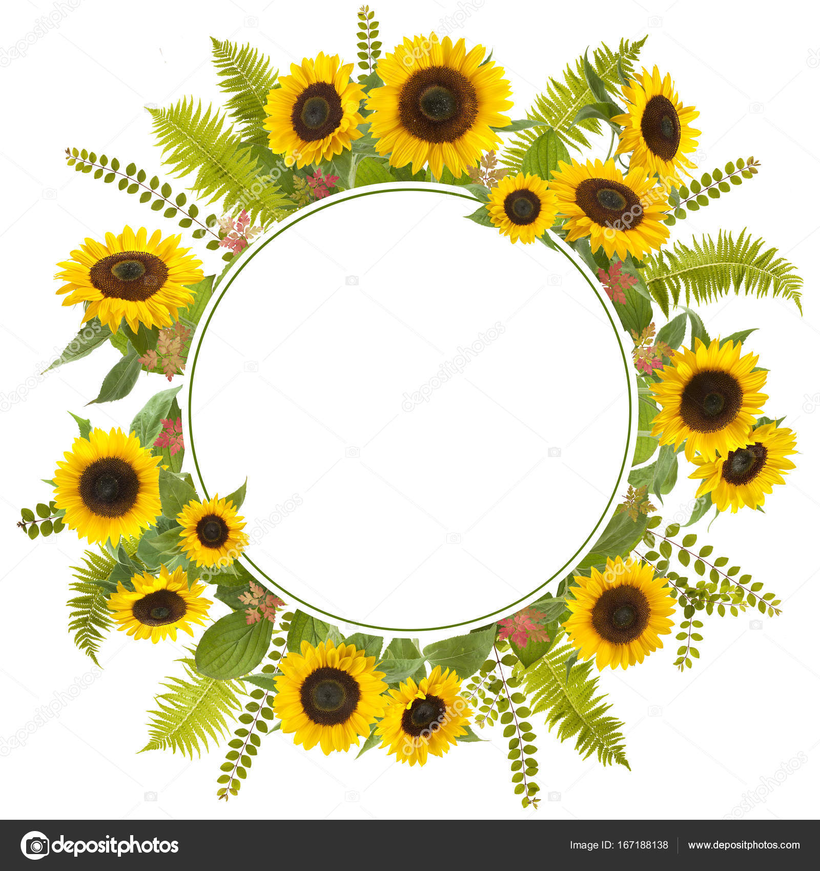 sunflower background image images wallpaper and free