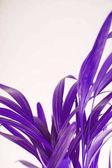 Fényképek trópusi egzotikus pálmalevél ultra violet lehet használni, mint a háttér
