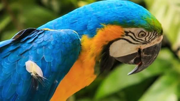 Gyönyörű fiatal papagáj