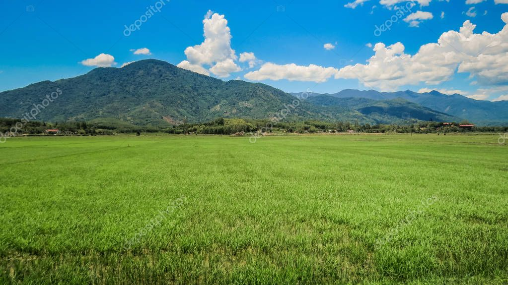 Green Rice Field against Hills Sky White Clouds