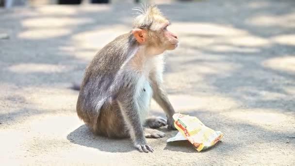 monkey sitting on asphalt pavement