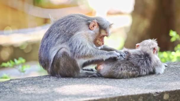 zwei Affen sitzen auf Stein