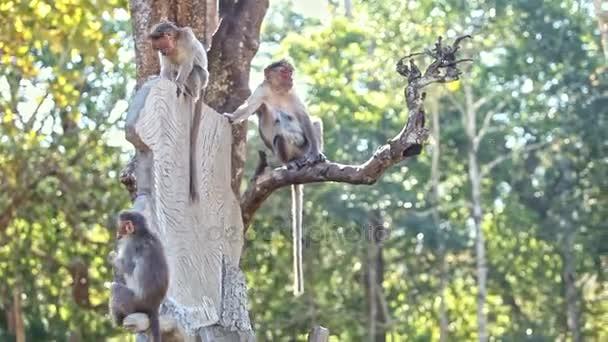 monkeys sitting on large tree