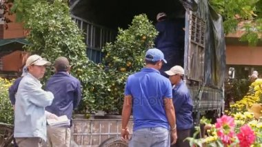 Workers load tangerine tree from cart into lorry