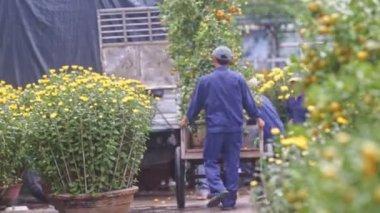 Workers carry tangerine trees in flowerpots in cart
