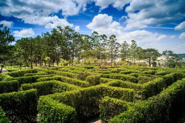 Plant Labyrinth in Modern Asian Park