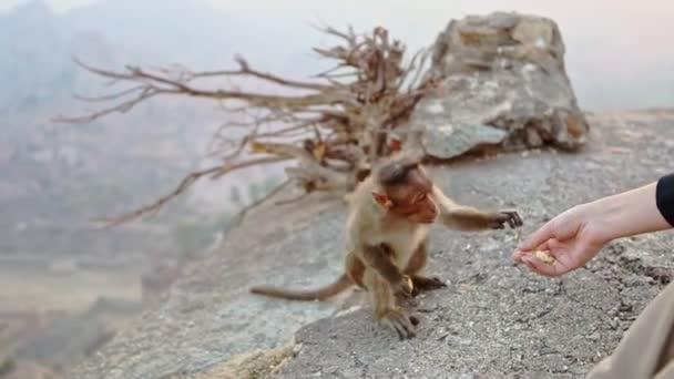 majom veszi élelmiszer turista kézzel