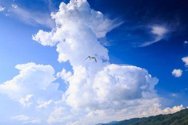 Seagull in Blue Sky against Clouds