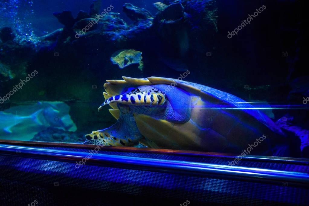 Fish in Oceanarium behind Glass