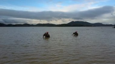 large decorated elephants with tourists on top wash in lake rippling grey water against distant hills under dark sky