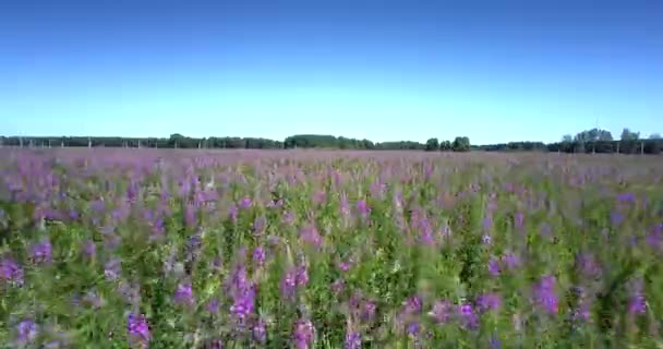 mozgás felett gyönyörű határtalan virágzó mező és virágok