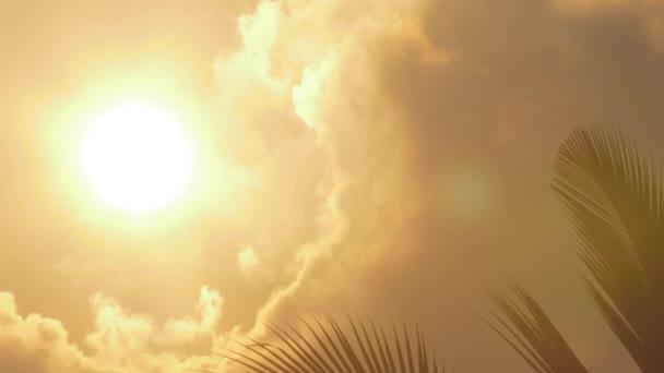 jasné slunce obklopené mraky svítí na palmu