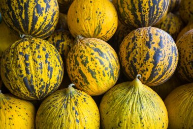 Ripe yellow melons