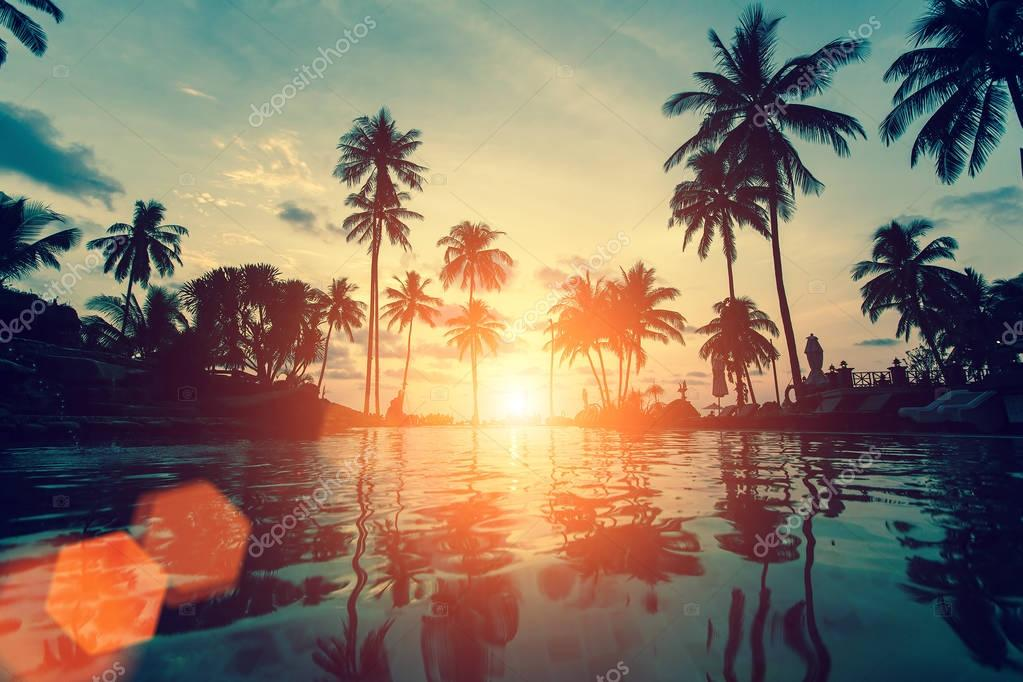 Silhouettes of palm trees