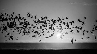 Birds over Atlantic ocean
