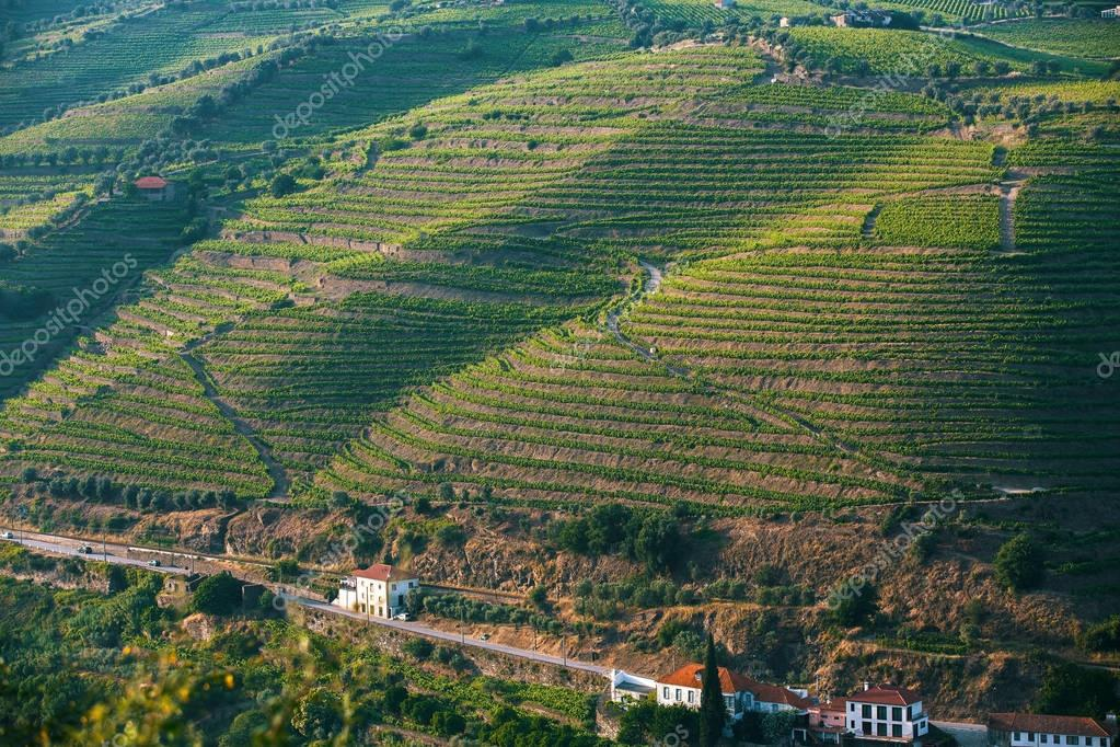 view of the vineyards on  hills