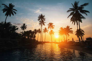 tropical beach during sunset