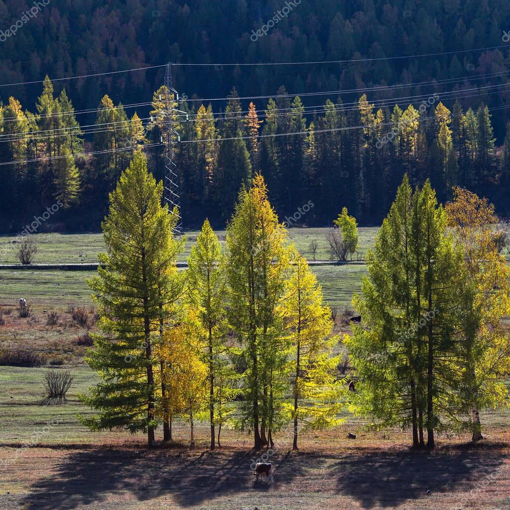 Altai Republic in autumn