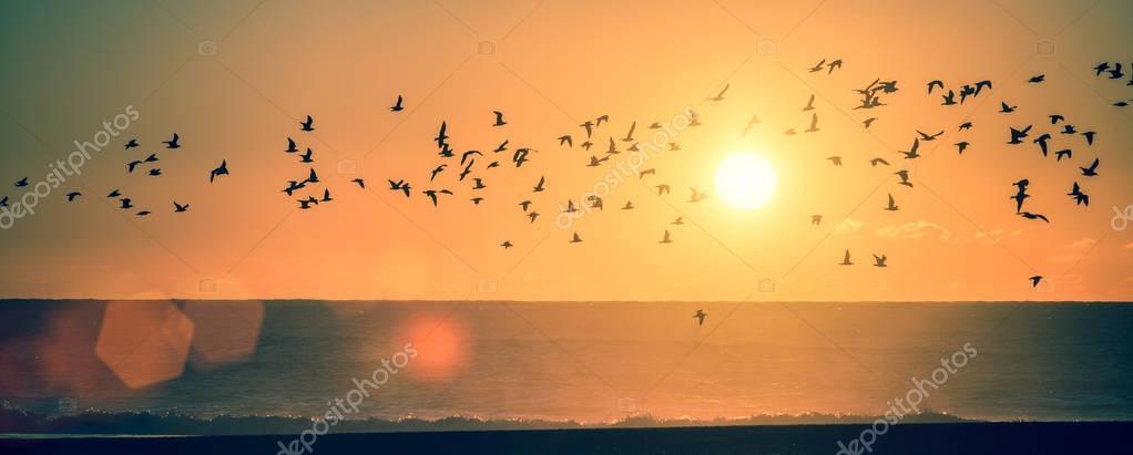 Panorama ocean beach at sunset