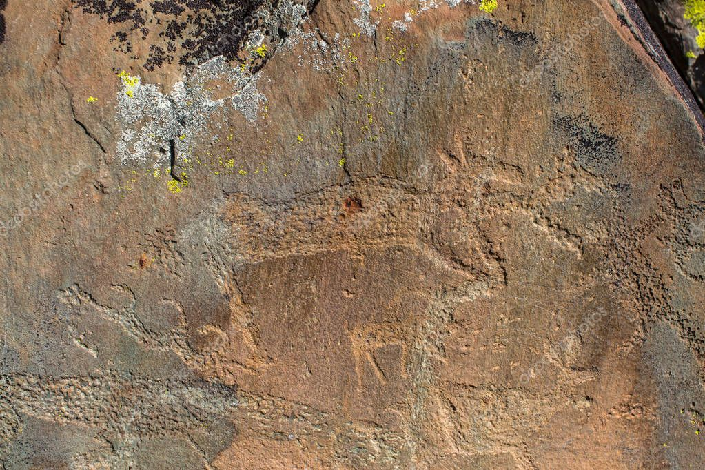 Petroglyphs (ancient rock paintings) in the Altai Mountains, Russia.
