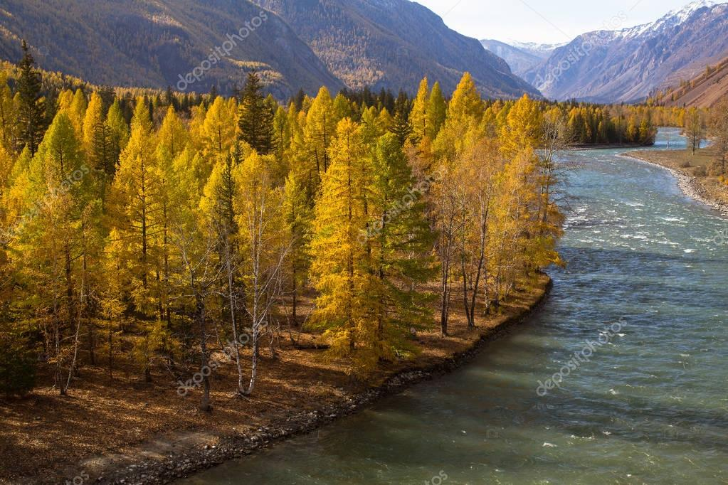 View of the Katun river at autumn, Altai Republic, Russia.