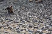 Olgiy, Mongolei - 30. September 2017: Kasachischen Golden Eagle Hunter in traditioneller Kleidung, mit einem goldenen Adler auf dem Arm während der jährlichen nationalen Wettbewerb mit Greifvögeln Berkutchi Westmongolen