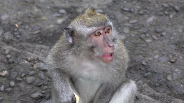 Monkey in Bali, Ubud