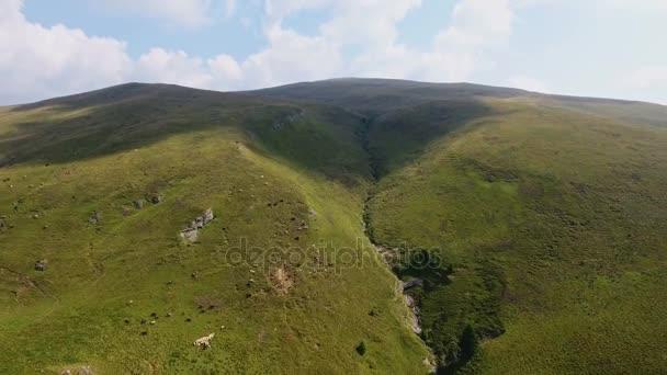 DRONY létající rychle - letecký pohled nad krav v horských 2