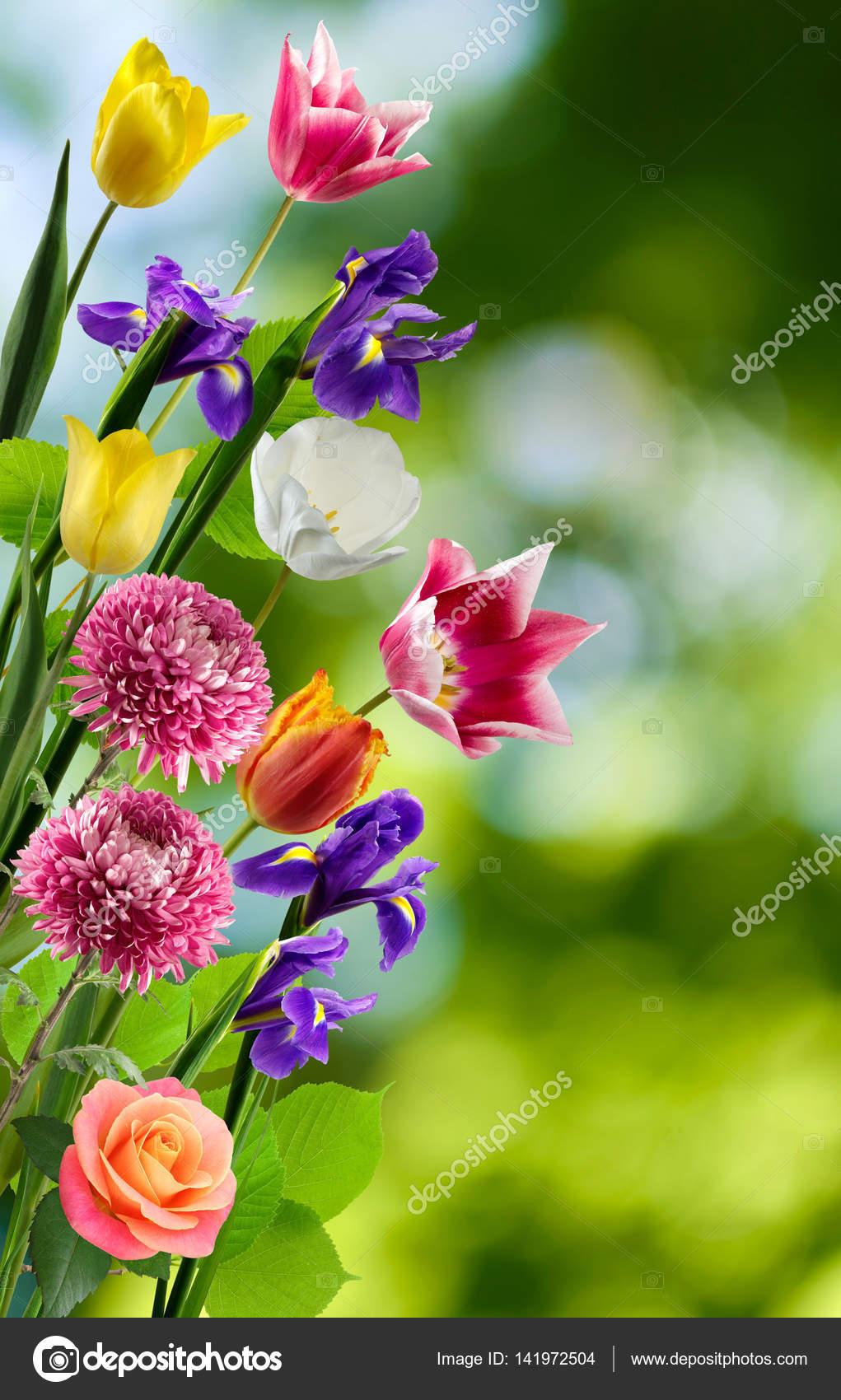 Resultado de imagen para las flores mas bellas imagenes