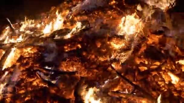 Strom hoření lesních požárů