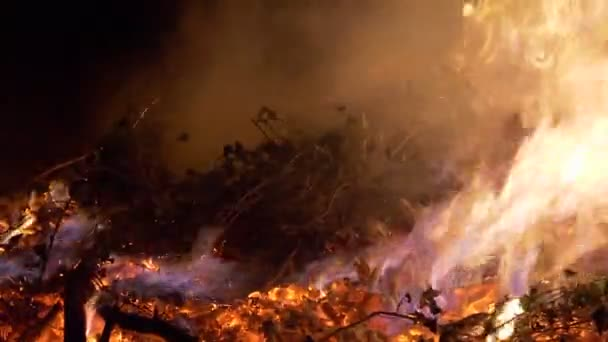 Waldbrand hautnah