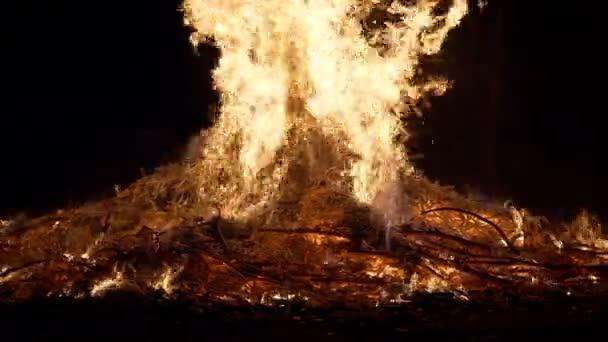 Erdőtűz Égő fa Lassú mozgás