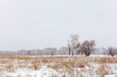 Zimní krajina. Studený den. Sněhová sezóna