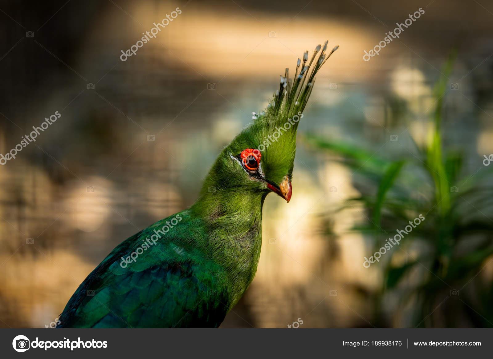 Großer grüner Schwanz