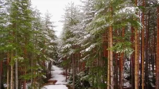 Smrkového lesa v zimě na horách