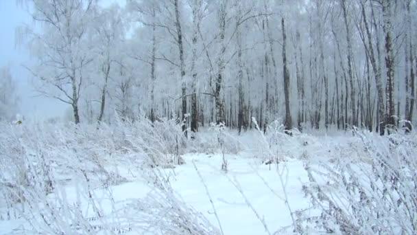 zimní les mrazivý zamračený den