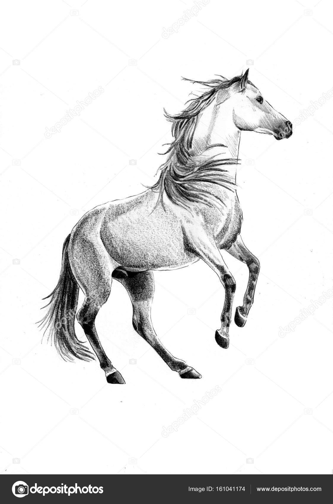 dibujo a lápiz cabeza caballo a mano alzada — Fotos de Stock ...