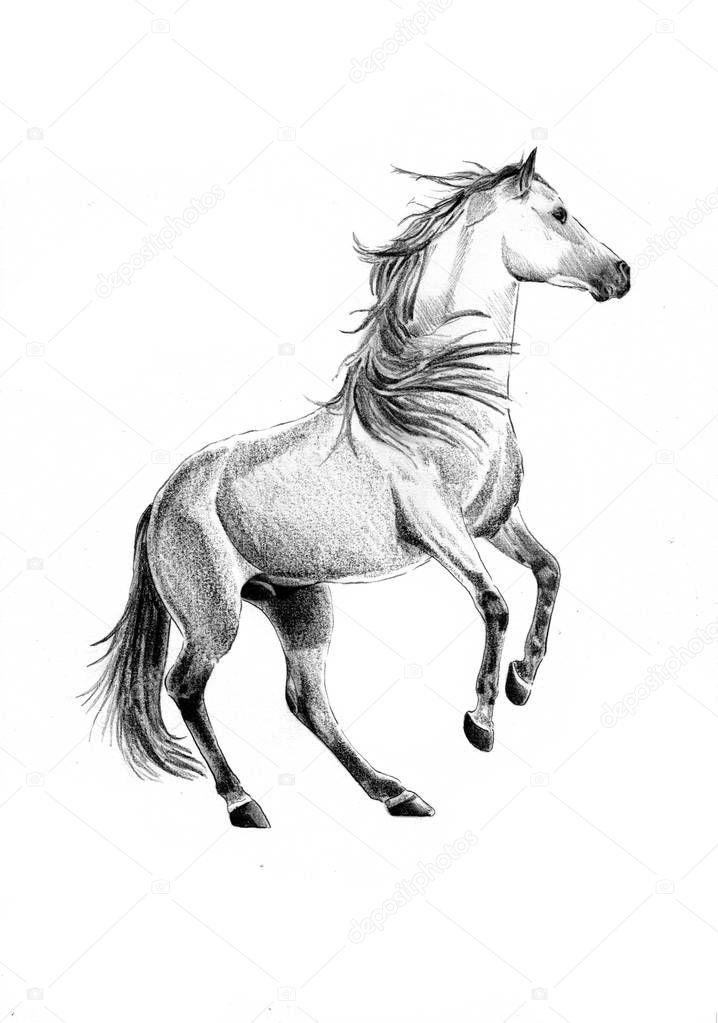 Disegno a matita testa cavallo a mano libera foto stock maxtor7777 161041174 for Disegni di cavalli a matita