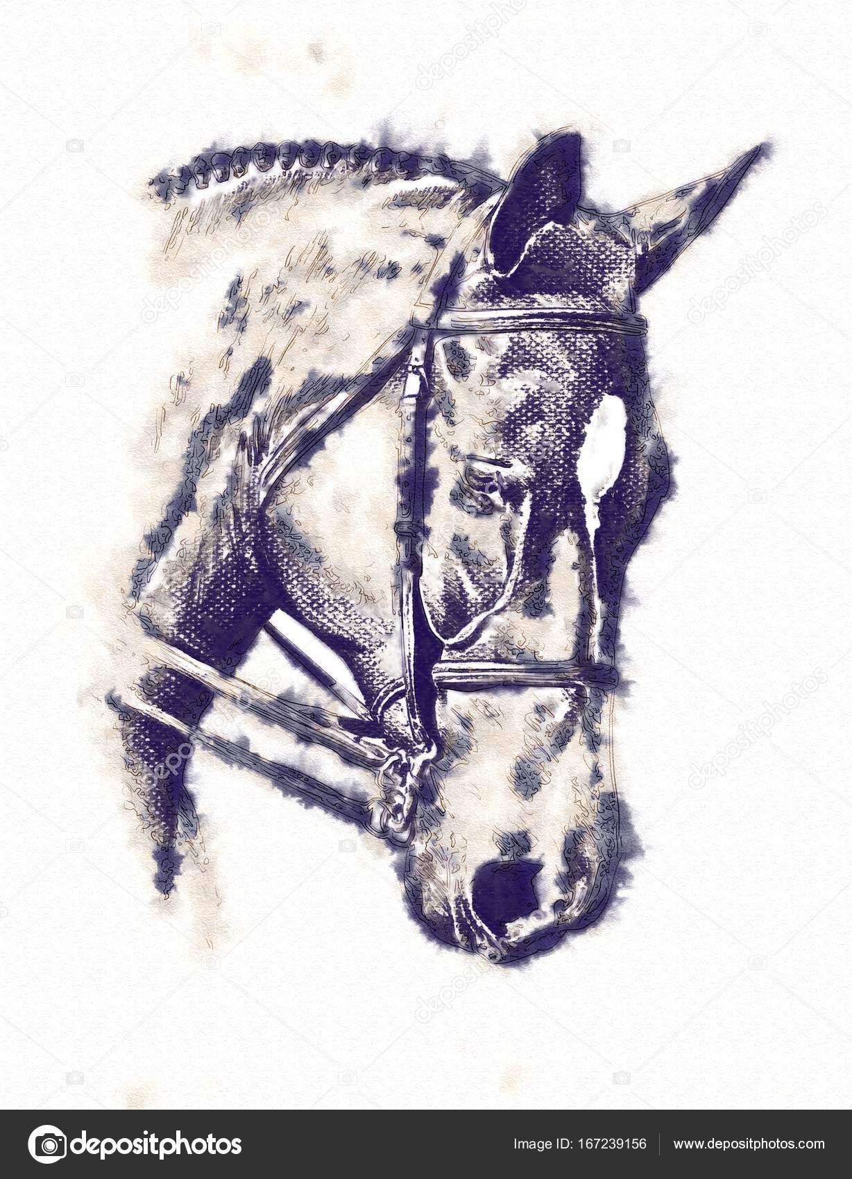dibujo a lápiz cabeza caballo a mano alzada — Foto de stock ...