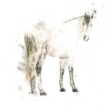 Colorful horse art illustration grunge painting