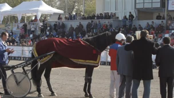 Ceremony of award of winner in harness horse on a stadium (slow motion)