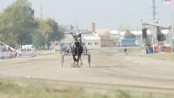 SLOW MOTION: Black racing horse with a jockey trots on a track (front view)