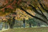 Fiatal fiú élvezi őszi fák, a park alatt