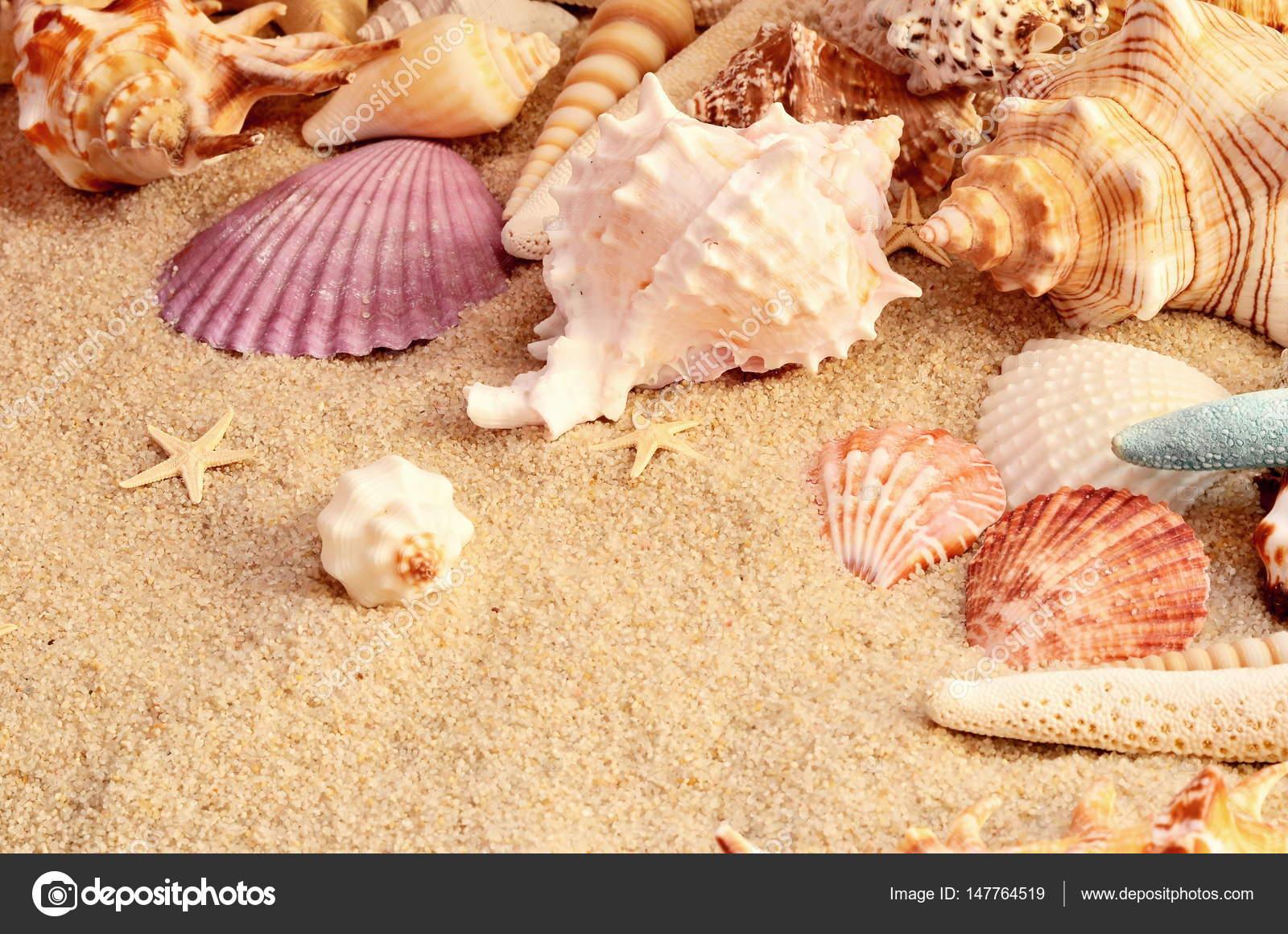 Imagenes Conchas De Mar Conchas De Mar Como Telon De Fondo - Fotos-de-conchas-de-mar