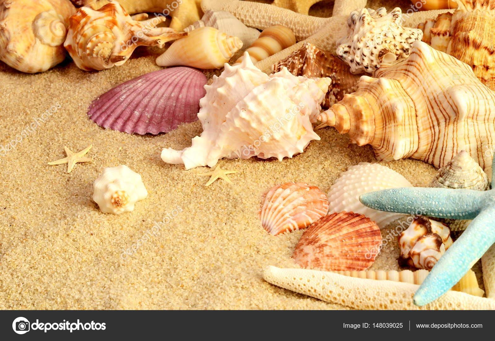 Fotos Conchas Marinas Conchas De Mar Como Telon De Fondo Conchas - Fotos-de-conchas-de-mar