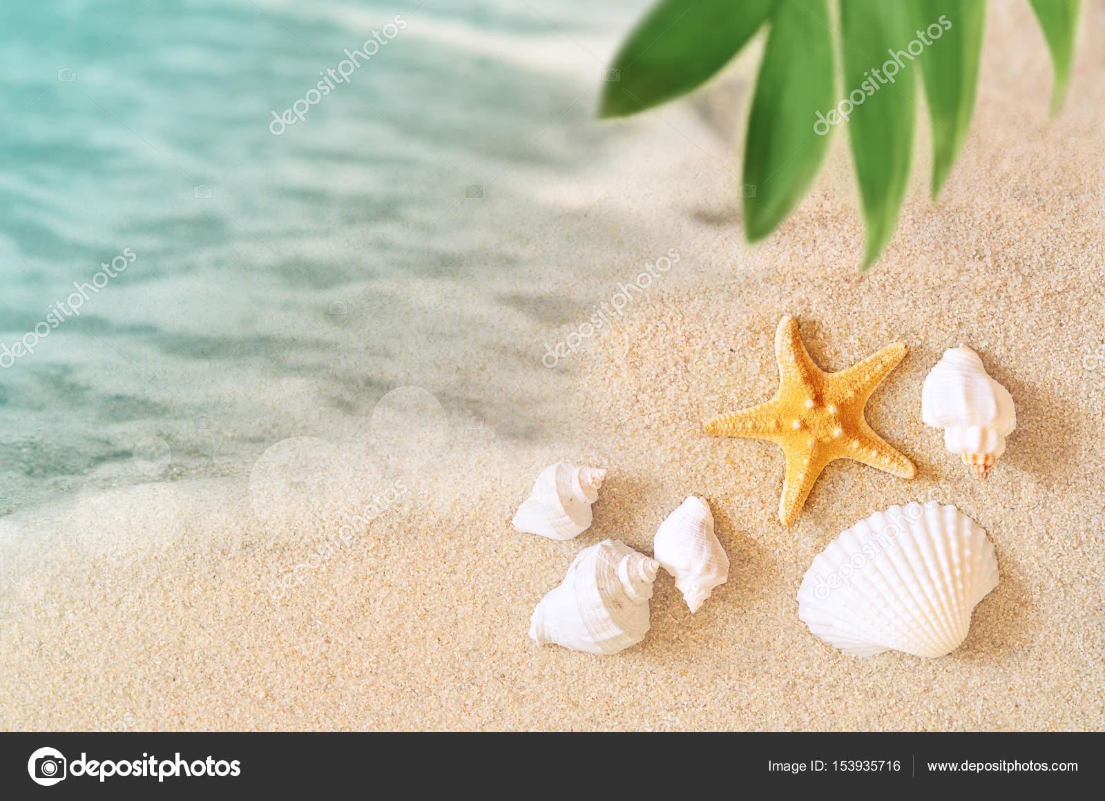 Conchiglie Di Mare E Palme Sullo Sfondo Sabbia Spiaggia Di Estate