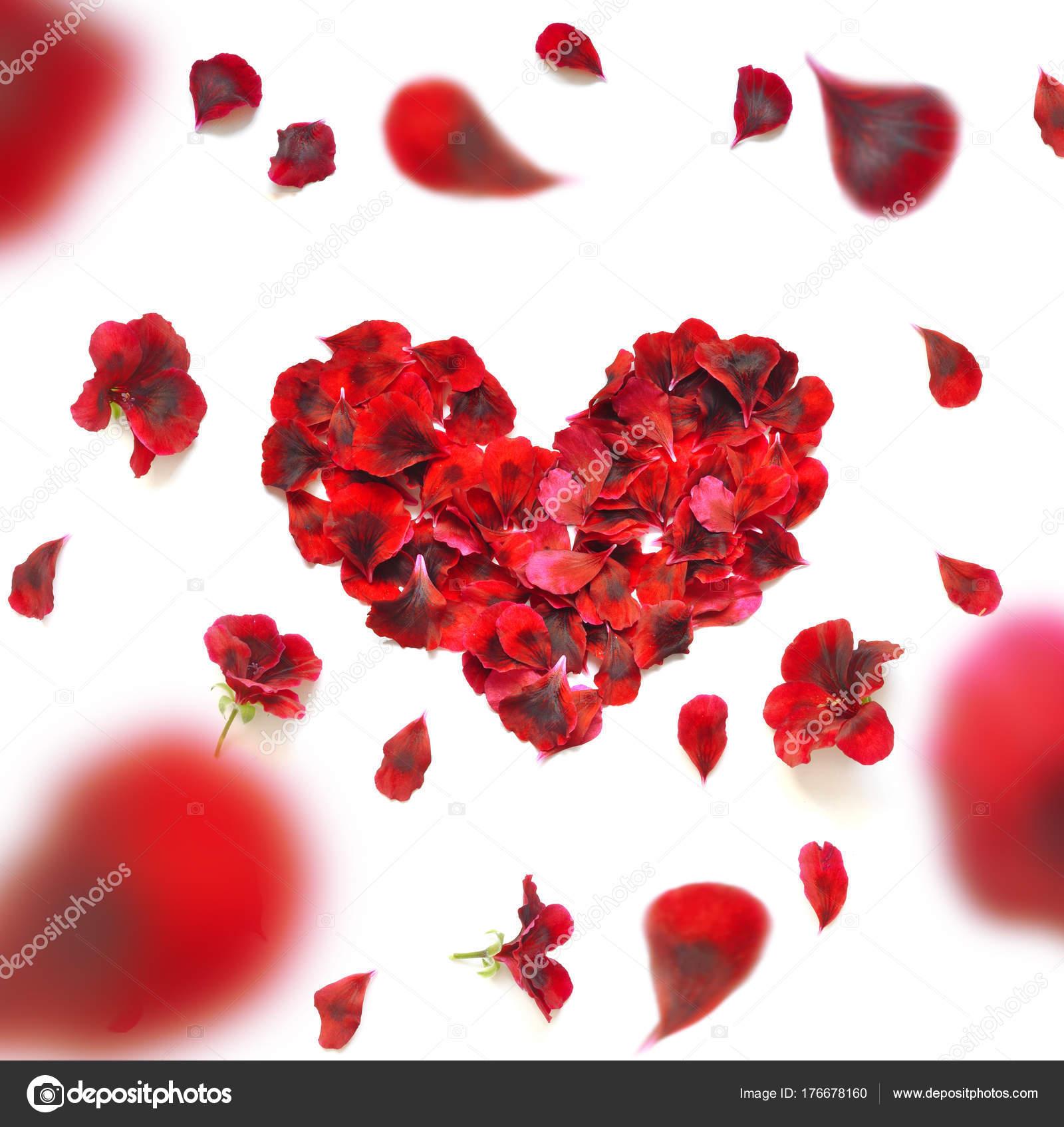 Coeur De Petales De Rose Coeur De Petales De Roses Rouges Sur Fond